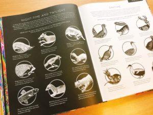 illuminatureの個々の動物の解説ページ